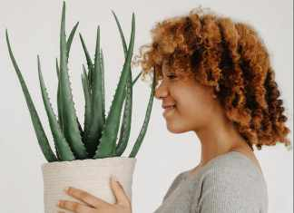 benefits of aloe vera on face